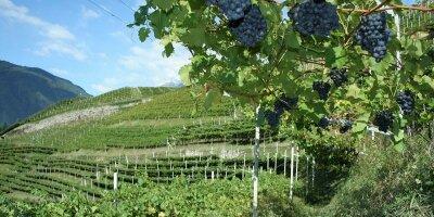Obst- & Weinbau