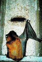 Fledermaushöhle 2F (universell)