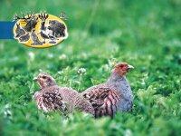 Wildschutzmischung WSM 1